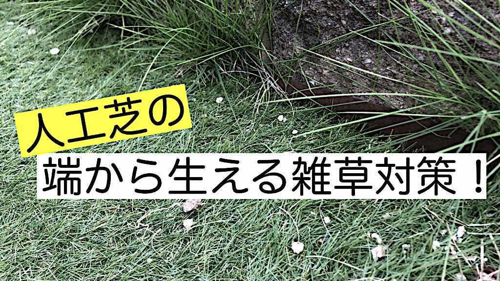 人工芝の端から生えてくる雑草