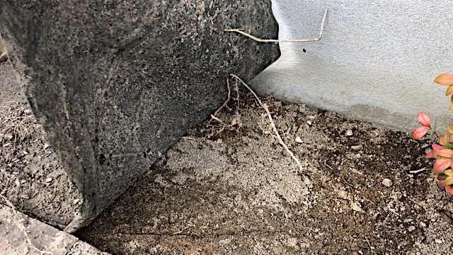 防草シートの下